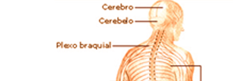 sistema_nervioso_articulo